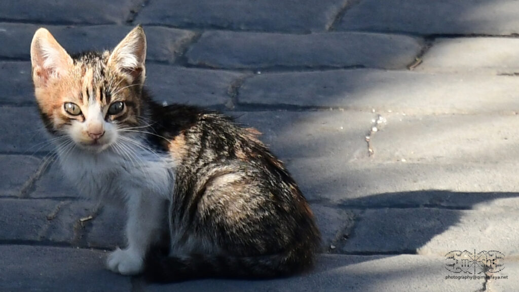 kitten in Arenas (Andalucia)